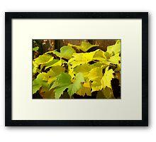 Autumn grape leaves Framed Print
