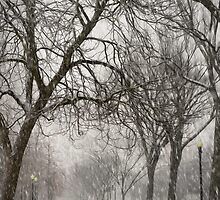 DC Winter by ShellyVC