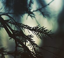 Untitled by OldHag