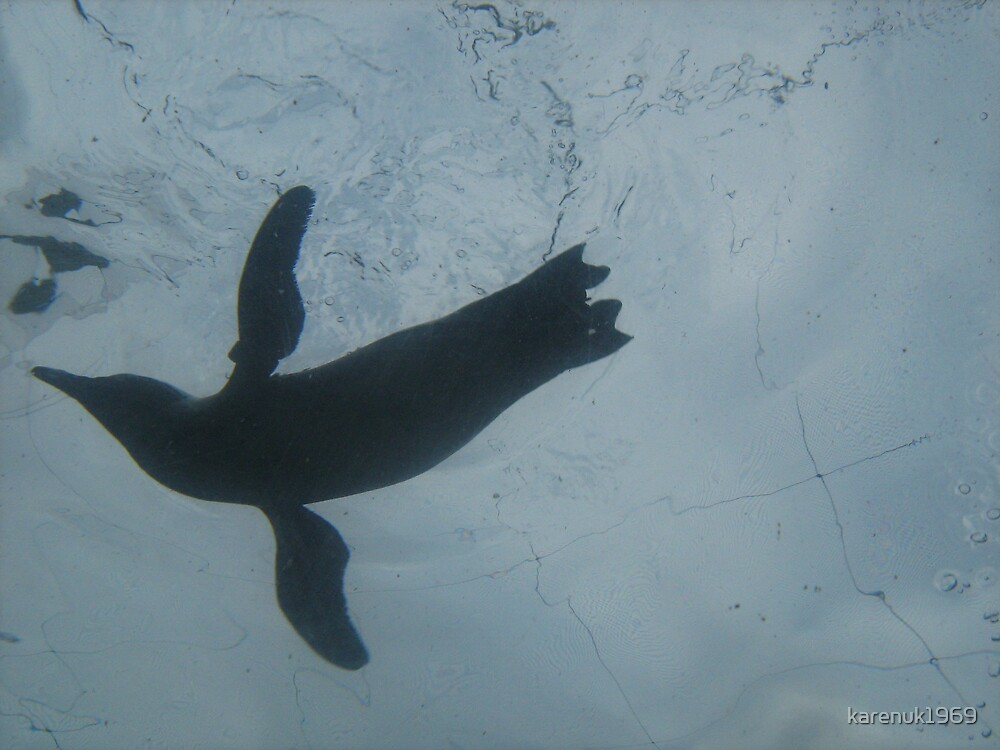 Penguin Flying in Water by karenuk1969