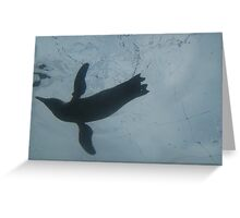 Penguin Flying in Water Greeting Card