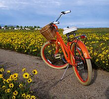 I Love My Bicycle by Pamela Hubbard