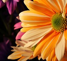 Colorful Daisy by Sheryl Kasper