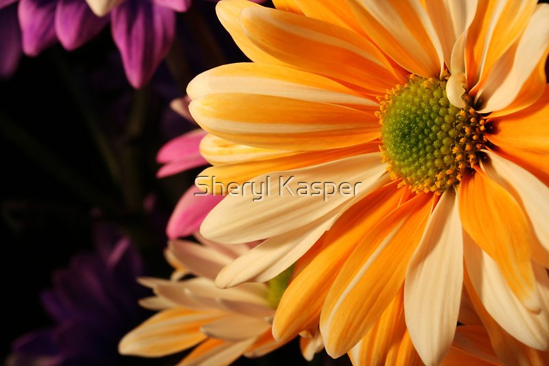 Colorful Daisy by Sheryl Kasper