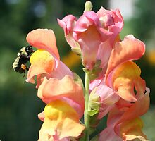 Snapdragon And Bee by SmilinEyes