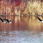 Flight of the Geese by Debbie Stobbart