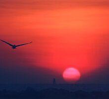 Sunset Flight by Debbie Stobbart