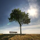 Lonely Bench - July by Louis-Thibaud Chambon