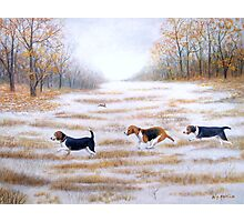 Three Beagles And A Bunny Photographic Print