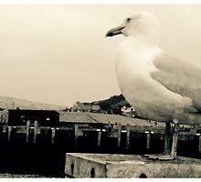 Seagull sensation  by ReviloPhotos