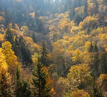 Valley Of Gold by Gary L   Suddath