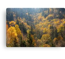 Valley Of Gold Canvas Print