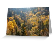 Valley Of Gold Greeting Card