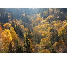 Valley Of Gold Photographic Print