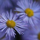 Flowers by Steve  Taylor