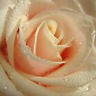 Delicate Rose by Rosy Kueng