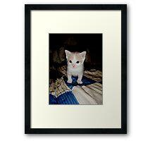 Who Me?? Wild Bill Kitten Framed Print