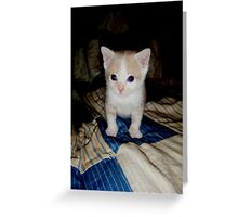 Who Me?? Wild Bill Kitten Greeting Card