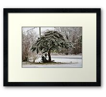 Juniper on Ice Framed Print