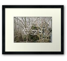 Pecan in Seven Springs Framed Print