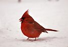 Cardinal In The Snowfall by Wviolet28