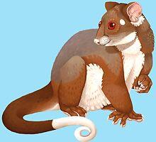 Common Ringtail Possum by lightningmoth