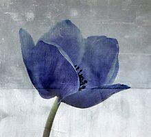 Blue Poppy by Kitsmumma