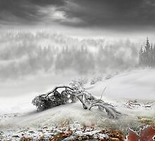 Winter by Igor Zenin