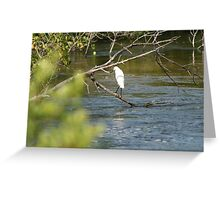 Florida Bird 1 Greeting Card
