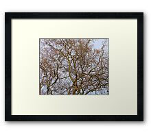 Twisted Willow Framed Print