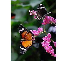 Butterflies Paradise Photographic Print