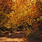 Central Park Autumn by Curley