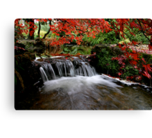 """Autumn's Water Fall in Red"" Canvas Print"