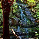 """Henderson Falls"" by Phil Thomson IPA"