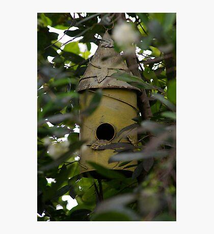 Bird Hideaway Haven Photographic Print