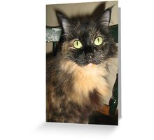 Bright eyes... Greeting Card