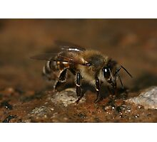 Could I Bee Closer Photographic Print