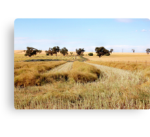 the start of the harvest [nikon d40 camera] Canvas Print