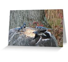 Battle of the Blue Jays Greeting Card