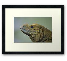 Lizard Profile Framed Print