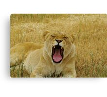 The Yawn part 2 Canvas Print