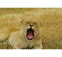 The Yawn part 2 Photographic Print
