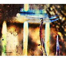 A Single Wish (Art & Poetry) Photographic Print