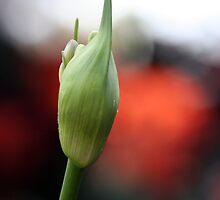 Flowers 8 by Mark Mair