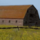 Barbed Wire Backdrop by TingyWende