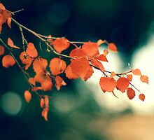 the changing colors of the season by Shilpa Shenoy