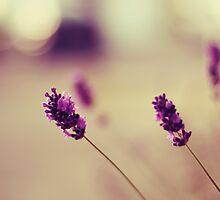 lavender love by Shilpa Shenoy