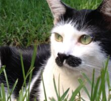 Felix The Moustache Cat - In grass Sticker