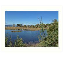 Oyster Harbor Wetlands Art Print