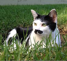 Felix The Moustache Cat - In grass by ZenJen16